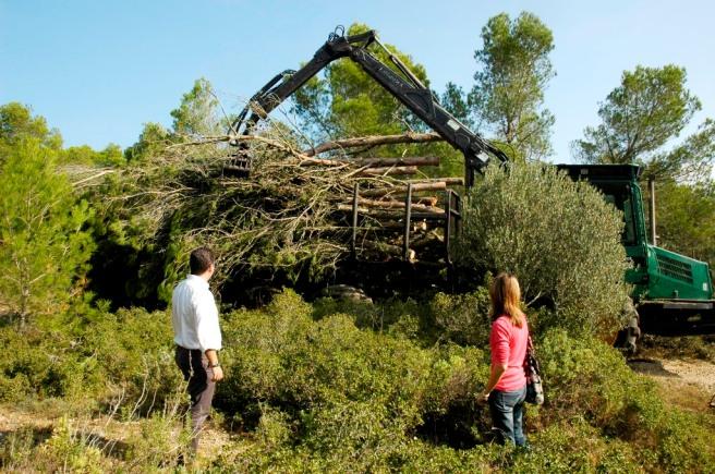 L'alcalde i la regidora mirant com la màquina carrega pins tallats. Foto: Aj de TdM